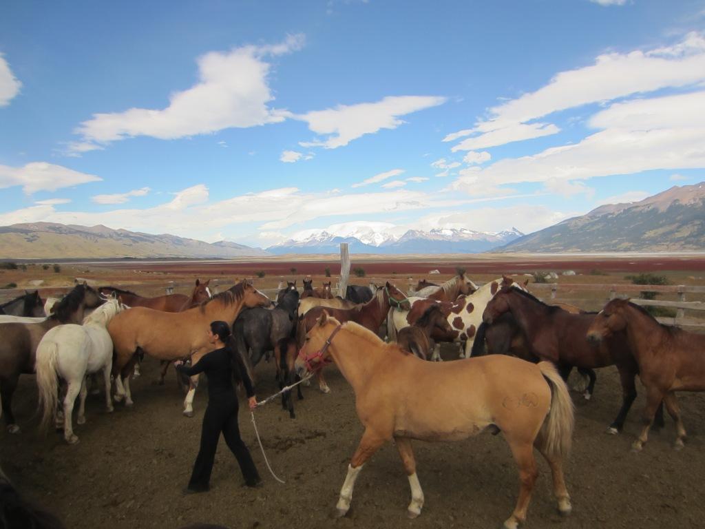 Eva getting one of the horses from the herd at Estancia Rio Mitre, El Calafate, Argentina
